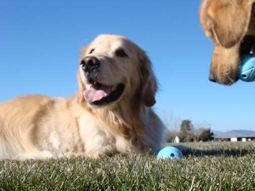 Dillon wants my ball again