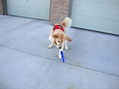 This Flexi leash is heavy
