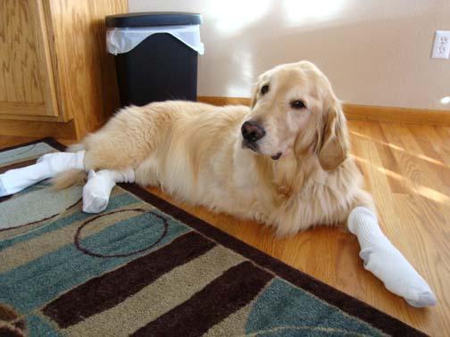 Socks, really?