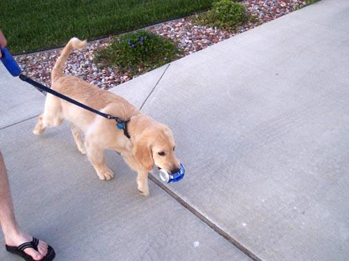 Always carrying something