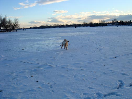 Dillon chasing his ball on Lake Loveland